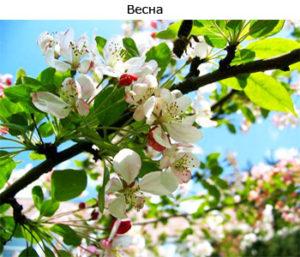 теория времен года весна