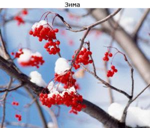 теория времен года зима